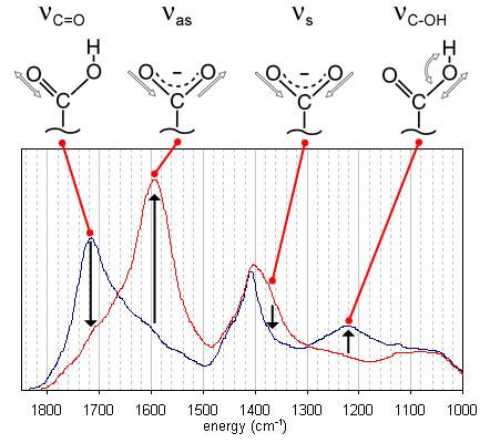 FTIR Protofulvix (Fulvic acid)